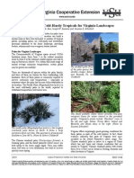 Psilocybe-Azurescens-Outdoor-Cultivation pdf | Wood | Horticulture