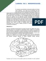 pac 1 neuro