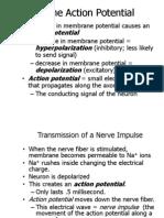 Neurosci Basic