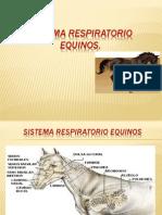 Sistema Respiratorio Equinos