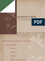 Invasive Plants 2011