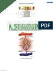 Analisis de Los Gases Sanguineos