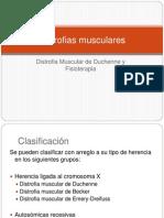Distrofias musculares 1
