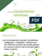 Microorganismos FINAL