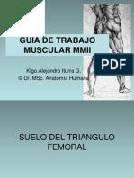 Guia Muscular 2011 Alejandro Iturra G UST Talca