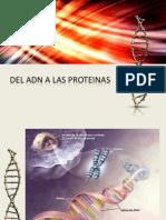 Del Adn a Las Proteinas 1