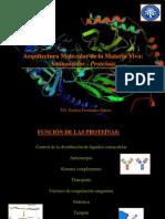 Clase 2 Arquitectura Molecular Proteínas