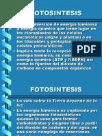 Fotosintesis Vii   PPT