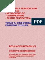 Hormonas PPT
