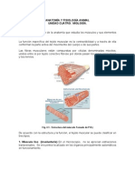 Unidad IV - Miologia