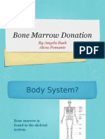 Bone Marrow Donation