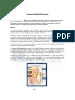 Anatomia Dentaria Udd