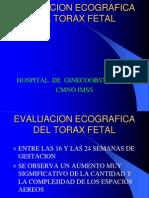 14) Tórax Fetal
