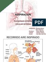 Respiración pulmonar