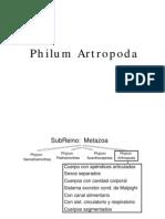 Metamorfosis en Artropodos