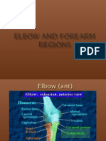 Elbow and Forearm Regions