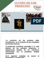 Evolución Primates