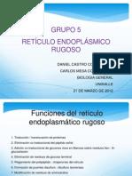 Expo Reticulo Endoplasmatico