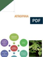 Presentacion de Botanica