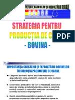 Strategie Carne Bovine 2009