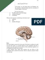 3-The Brain (Cont.)