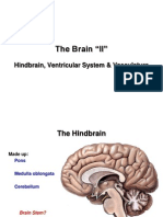The Brain 2 E-learning (1)