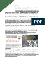 Sintesis Sitoskeleton Pada Sel Tumbuhan