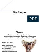 17 the Pharynx e Learning