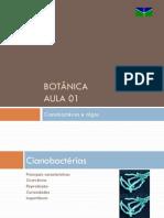 Cianobactérias