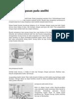 Sistem Pernapasan Pada Amfibi