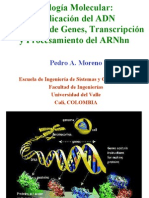 ReplicacionTranscripcionClase3