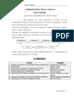Ovipari - Percorso didattico - Classe 4