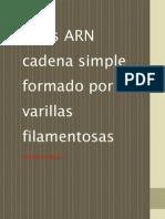 Fito-Virus ARN-Exposición-Imprimir