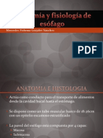 anatomayfisiologadeesfago-100912184754-phpapp01