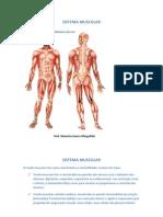 Sistema Muscular[1]