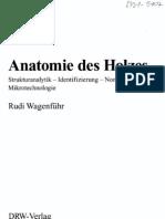 Anatomie Des Holzes