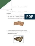 Filum Porifera