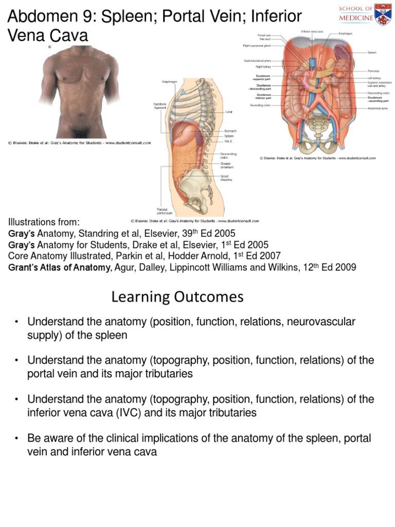 Abdo 9 Spleen, Portal Vein, IVC (Slides) | Spleen | Vein