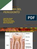 Anatomia Del Periodonto