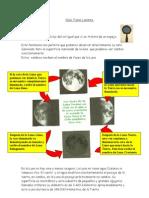 Guía Fases Lunares