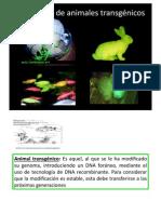 CGFeijo_clase Transgenicos Biomed