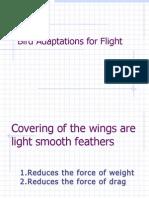 Bird Adaptations for Flight