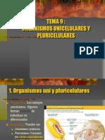 9 Uni Pluricelulares 1