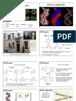 BIOL 200 Molecular Biology Lecture Notes   Dna Replication   Primer