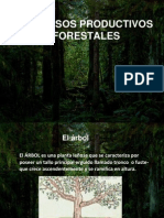 Proceso Forestal