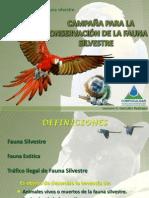 TRÁFICO DE FAUNA SILVESTRE