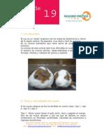 FichaTecnica19-Crianza de Cuyes