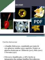 filogenia - Malvaceae e myrtaceae