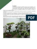 Manual Sobre El Cultivo y Cuidados Del Bonsai