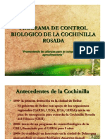 Control Biologic o Cochin Ill a Rosada